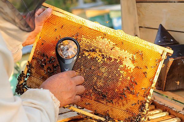 почему бывает аллергия на мёд