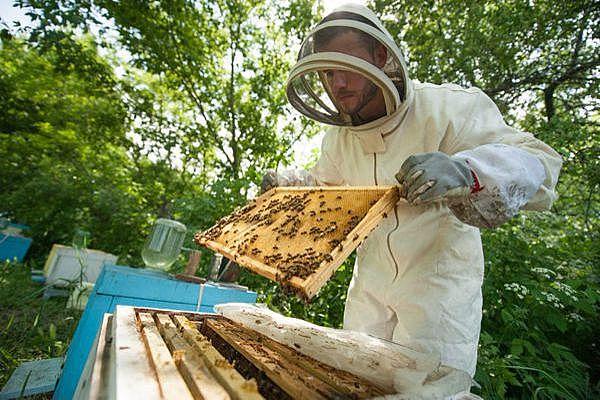 """""""лекарственные"""" продукты пчеловодства"""